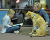 Wanted: Kids to read to a dog at Walkertown Branch