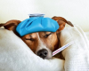 Canine Influenza: What You Need to Know