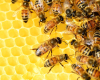 Beekeeping 101 on October 12th at Walkertown