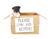REMINDER:  Forsyth County SPAY DAY - A One Day Event!