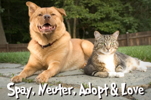 Spay, Neuter, Adopt and Love
