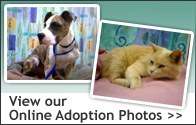 View our Online Adoption Photos