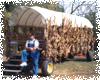 Festival of Lights Hayrides
